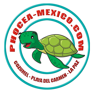 followme-production-clients-videos-phocea-mexico